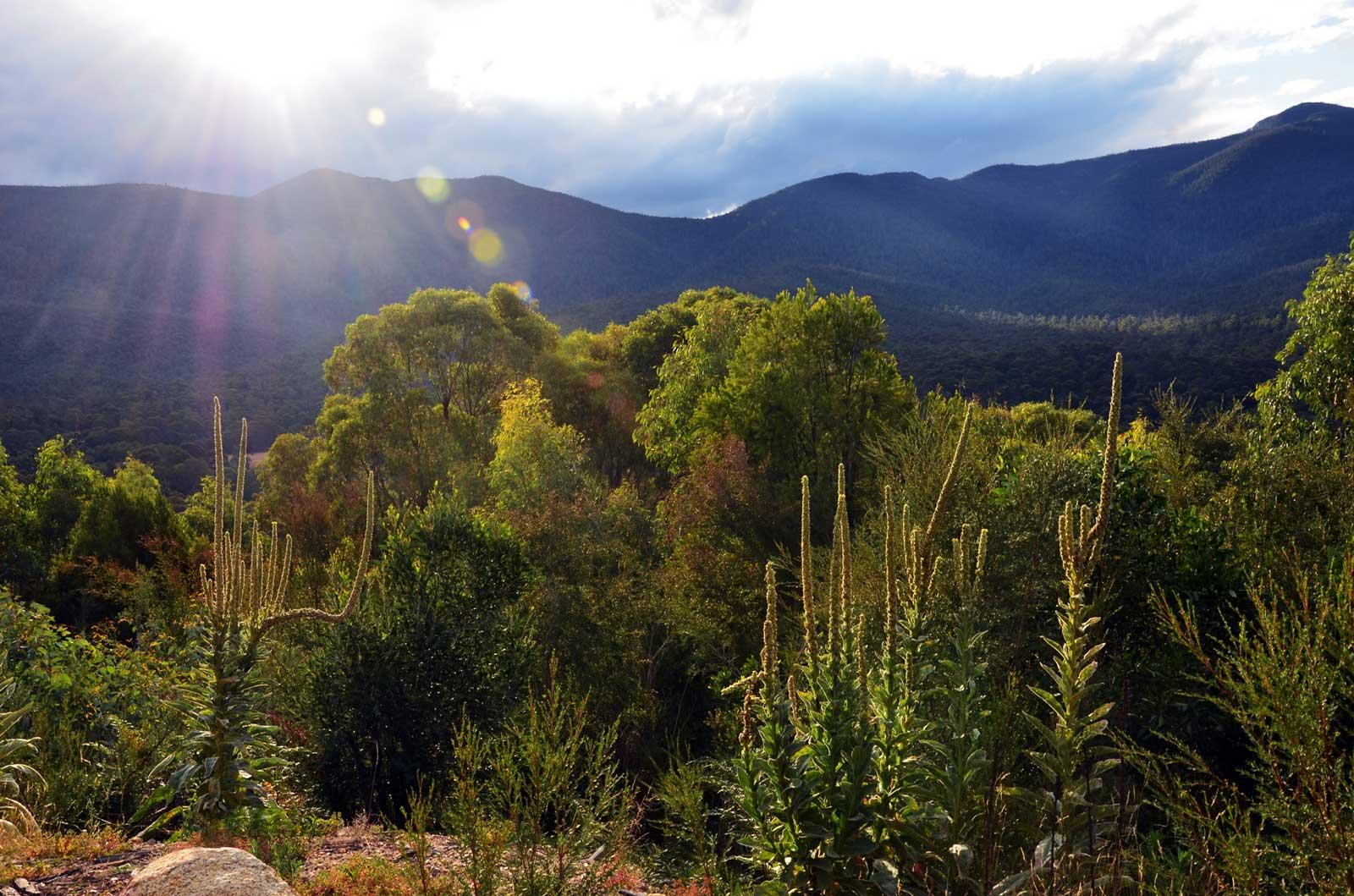 Ashbrook Fire Trail, Tidbinbilla Nature Reserve, Australian Capital Territory